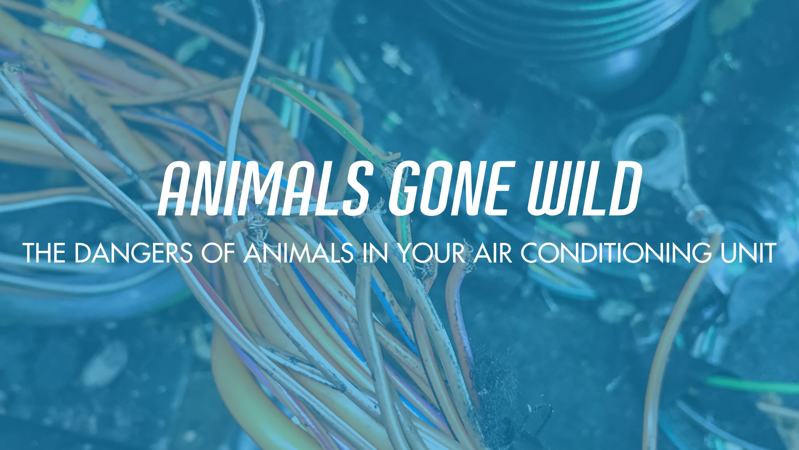 The dangers of animals in your air conditioning unit