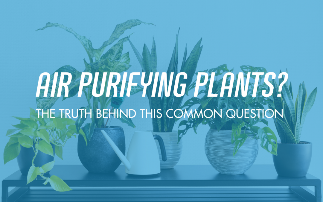 Air Purifying Plants? Improving The Air Quality In Your Home