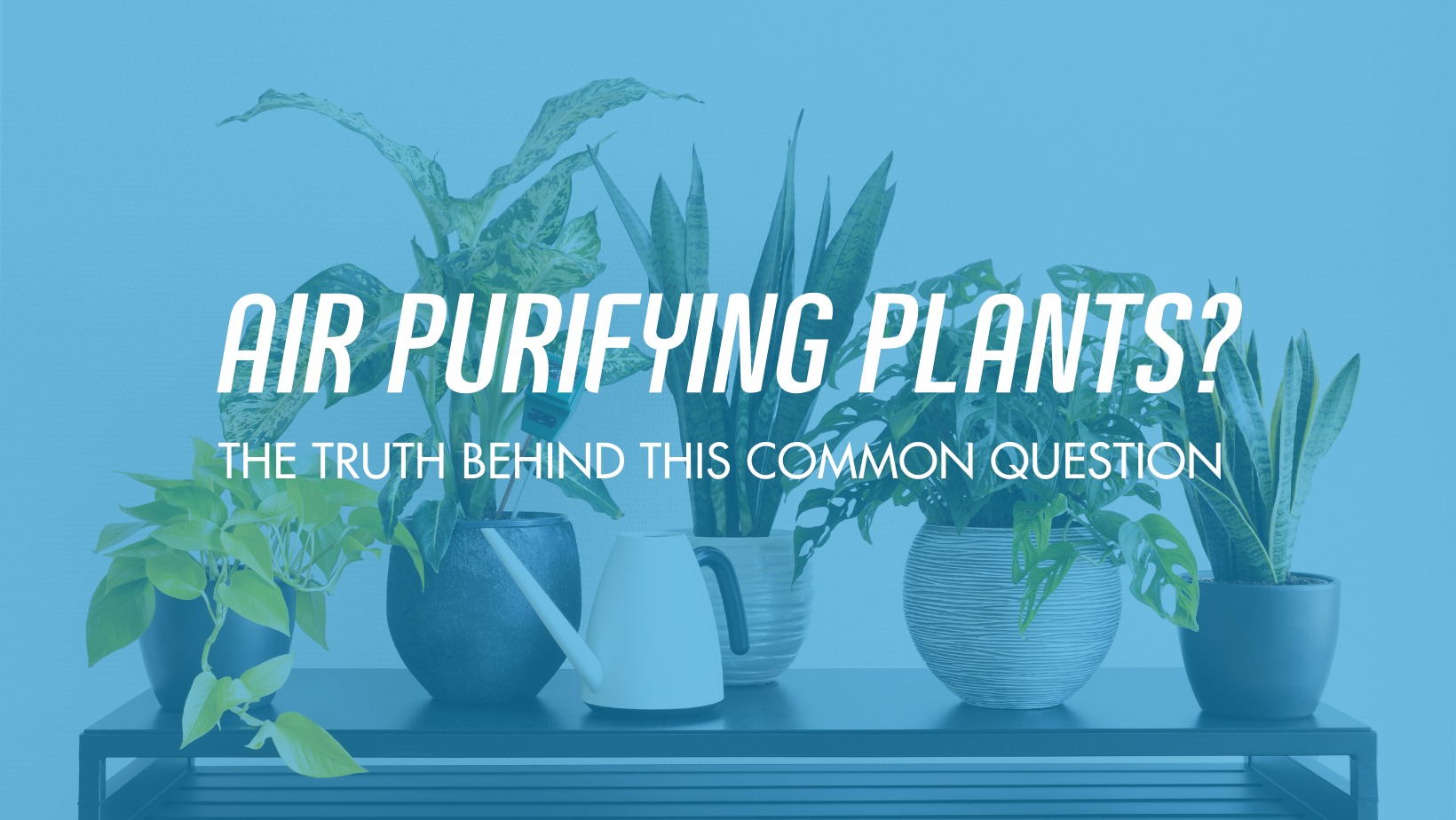 Do plants improve the air quality in your home?
